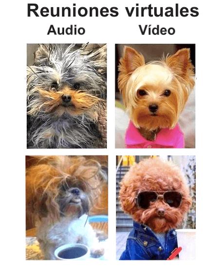 meme glamour en reuniones virtuales
